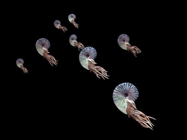 ammonite_220_600x450